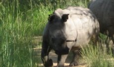 Tracking Rhinos in Zimbabwe