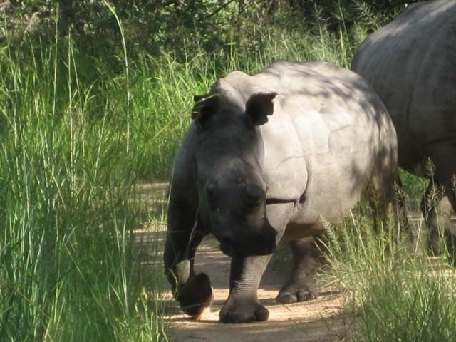 andBeyond Translocates Six Rhino from Phinda to Botswana