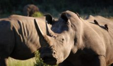 Travel Deals: South Africa on Sale with Lion World Tours