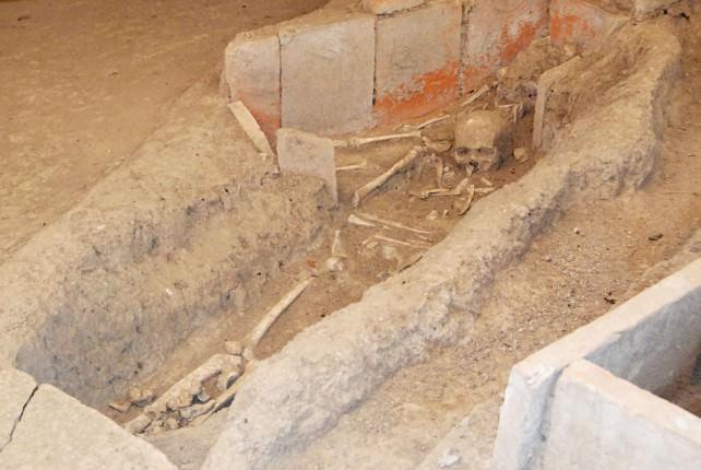Viminacium Excavated Bones