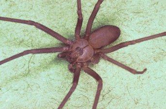 How to Avoid Spider Bites
