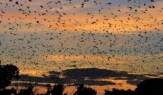 Travel Deals: Halloween Brings Bevies of Bats to Zambian Skies