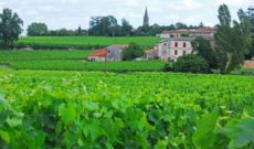 WJ Tested: Globus La France Motorcoach Tour – Saint Emilion