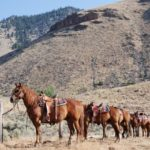 Horseback Riding Vacation at Twin Peaks Ranch, Idaho, USA