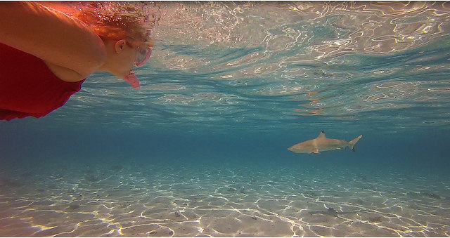 Snorkeling With Sharks in Bora Bora