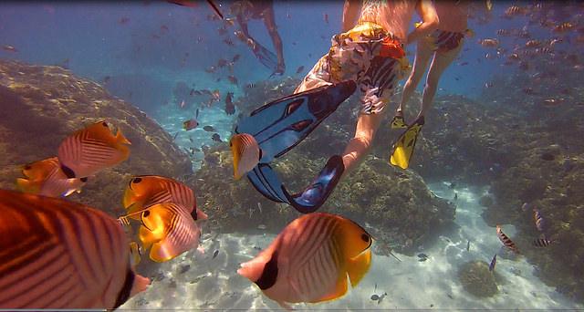 Coral Garden in Bora Bora