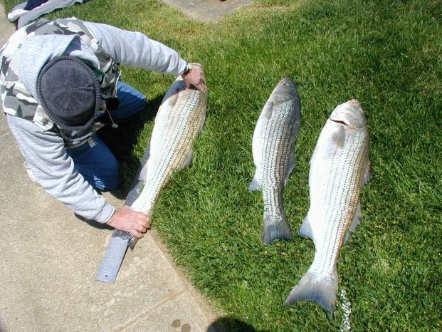 Fishing for Rock Fish in Chesapeake Bay