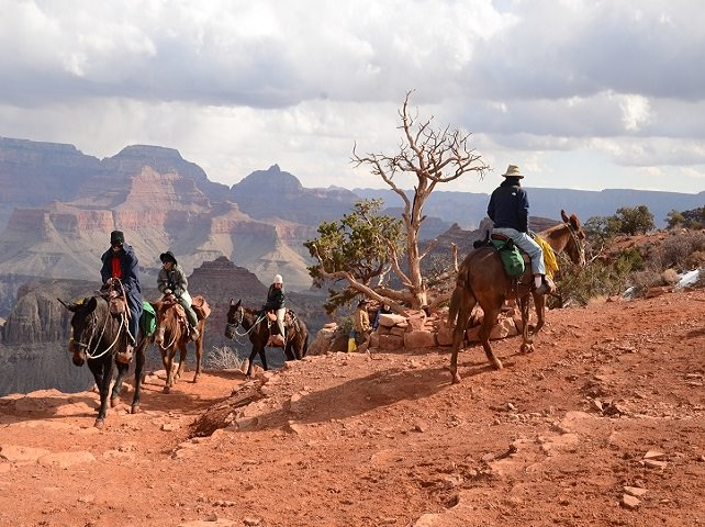 Donkey caravan in the Grand Canyon