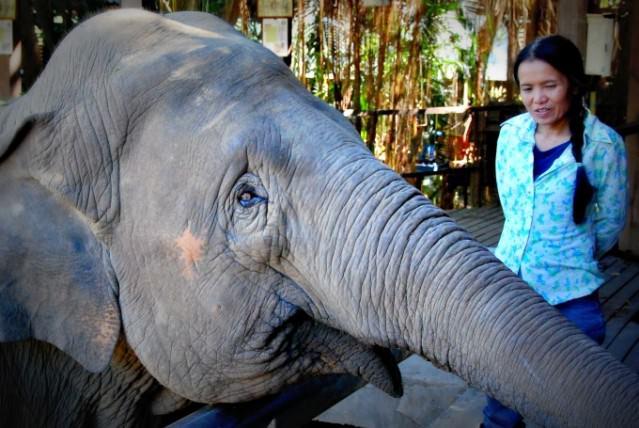 "Sangduen ""Lek"" Chailert, Founder of Elephant Nature Park"