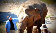 Travel Thailand: WAVEJourney's Elephant Nature Park Adventure