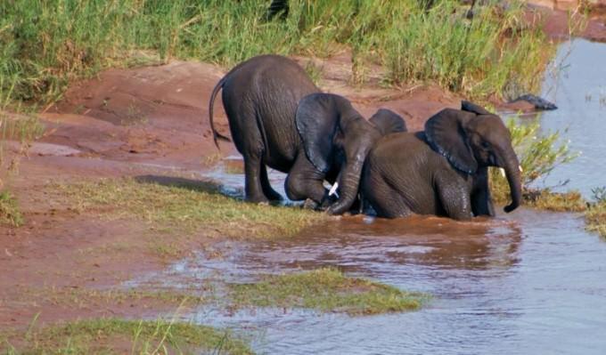 Chobe National Park, Botswana. Photo courtesy of Acacia Africa.