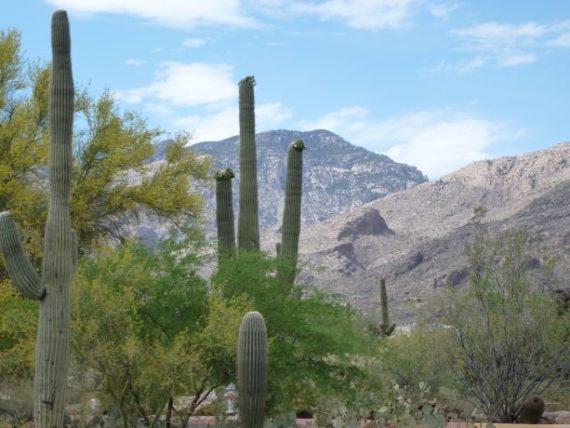 Santa Catalina Mountains in Tucson, Arizona