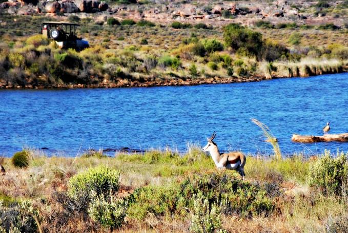 Nature Drive at Bushmans Kloof