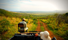 Big 5 Safari at Phinda Private Game Reserve