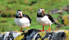 Journey to St. Kilda – What I do for Puffins