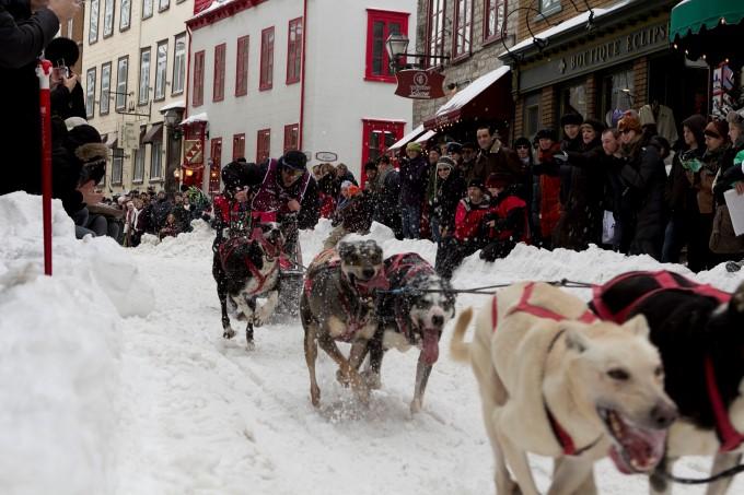 Quebec Winter Carnival - Dog Sledding race