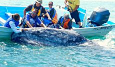 Whale Watching Excursion in Magdalena Bay