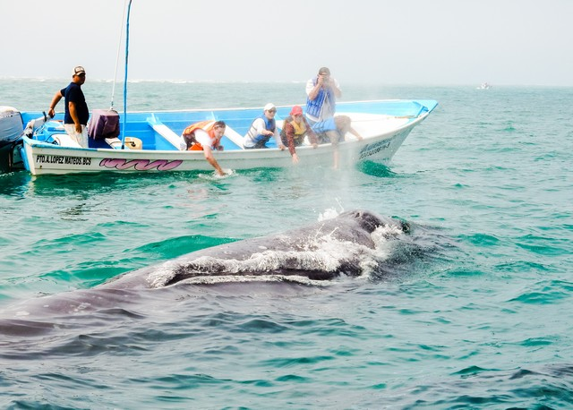 Un-Cruise Adventures included whale watching excursion in Magdalena Bay