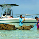 Jill Takes a Piggy Tour in the Bahamas