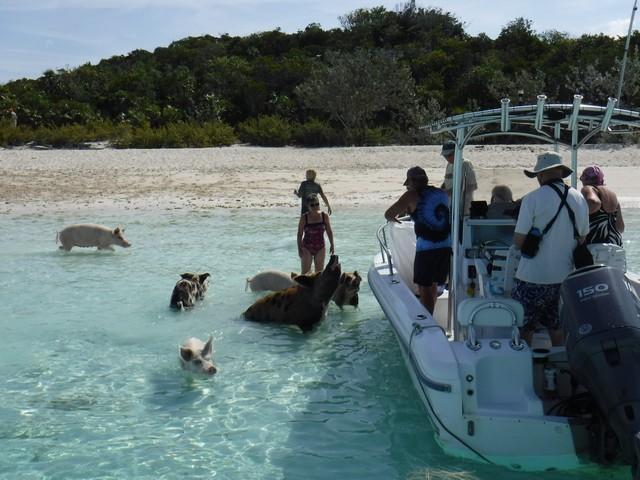 Optional piggy excursion