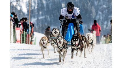 International Dog-Sledding Race in Gadmen. Photo Courtesy of Switzerland Tourism.