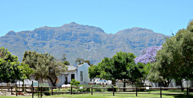 Stellenbosch in South Africa by Jill Hoelting