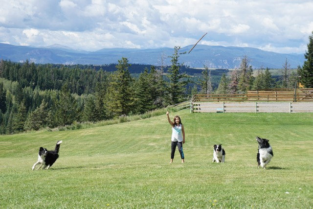 Jada playing with the border collies at Echo Valley Ranch