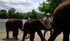 Travel Ontario, Canada – African Lion Safari