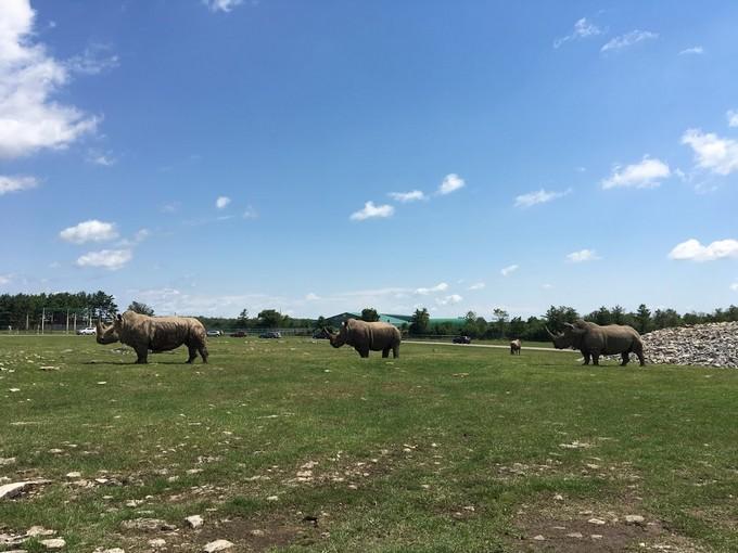 Ontario African Lion Safari - Rhinos