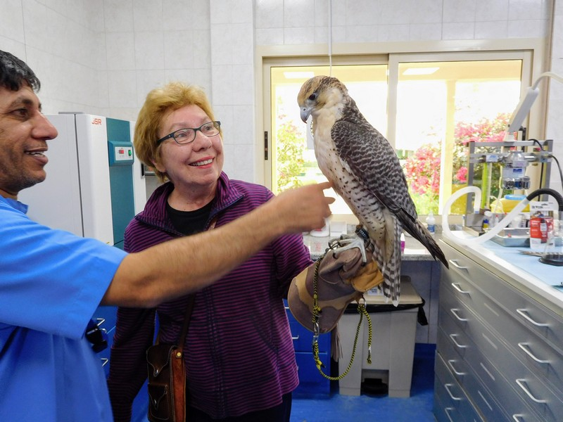 Elizabeth von Pier at the Abu Dhabi Falcon Hospital