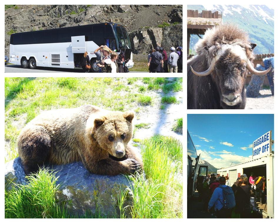 Alaska Cruise Transportation - ACT Big Bus
